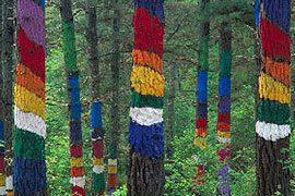 SENDERISMO y Nordic Walking: una forma diferente de visitar el Bosque de Oma @ País Vasco | España