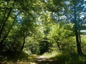 SENDERISMO y Nordic Walking: Barazar - Otxandio, travesía entre puertos @ País Vasco | España