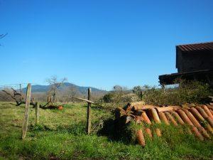 SENDERISMO y Nordic Walking: Por caminos rurales entre Mungia y Gatika @ MUNGIA | Munguía | País Vasco | España
