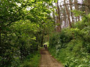 SENDERISMO y Nordic Walking: Aulesti-Lekeitio, caminata a orillas del Lea @ Urduña | Euskadi | España