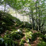 SENDERISMO interpretativo: Por el laberinto de Itzina (P.Natural del Gorbea) Bizkaia @ Urduña   Euskadi   España